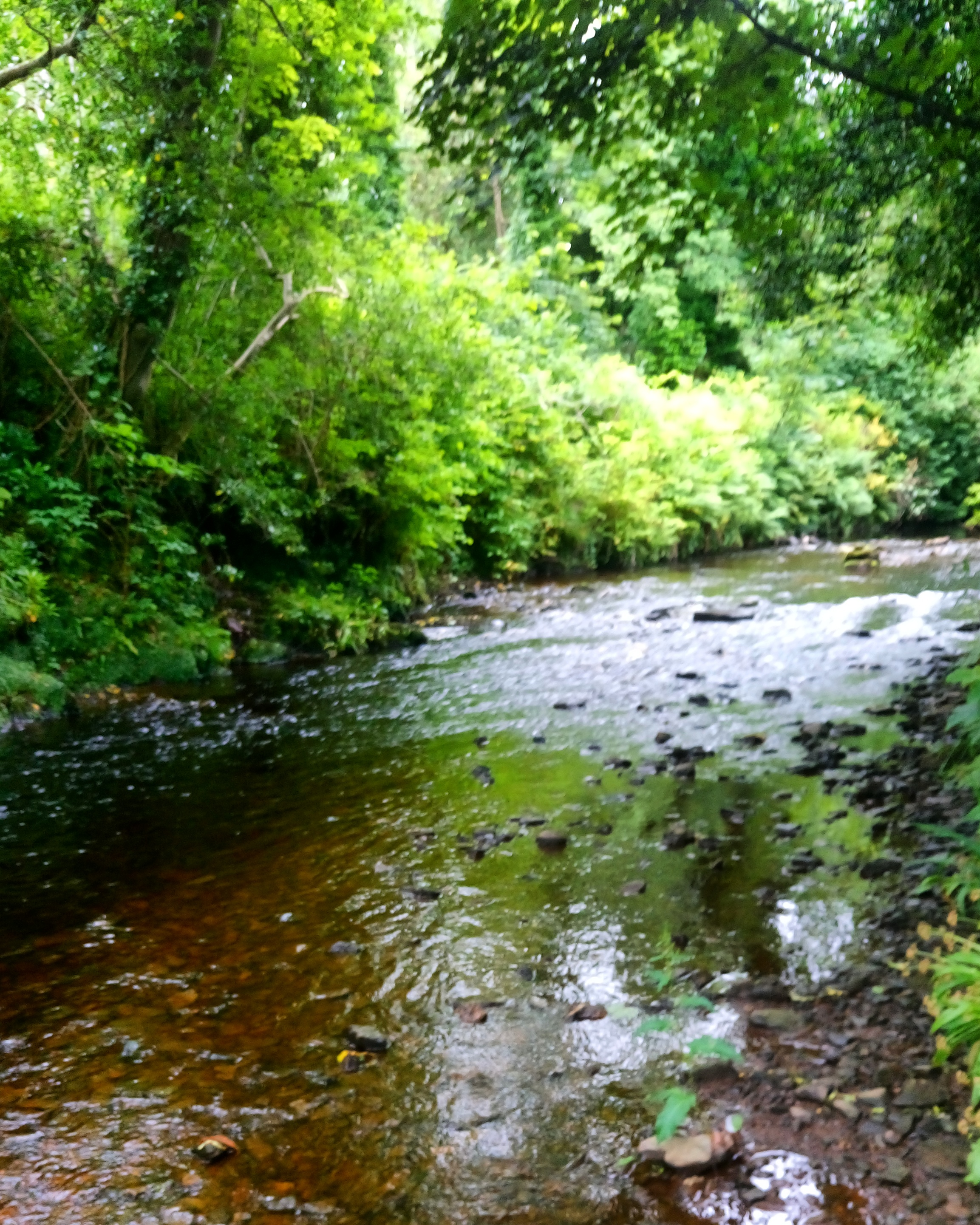 Bredagh River at Moville Boutique Hostel
