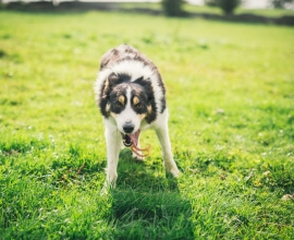 A Pet Friendly Stay in Inishowen, Donegal